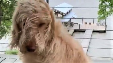 It's a windy day for this pup