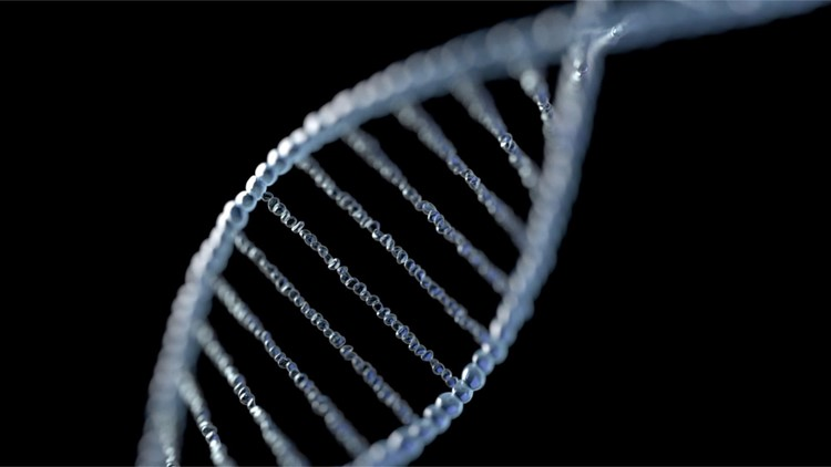 New 'Ghost' Genome Found in 50,000 Year Old Prehistoric Human