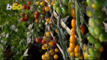 Cento Facing Class-Action Suit Over Authenticity of Its San Marzano Tomatoes