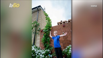 Behemoth Beanstalk! 5-Year-Old Boy Looks to Set World Record with His 15-Foot Beanstalk!