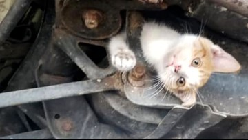 9-week-old kitten rescued from car's frame