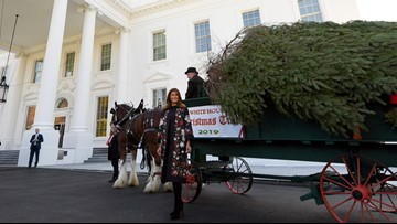 Melania Trump receives official White House Christmas tree