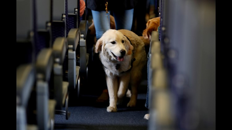 AP ANIMALS ON PLANES A FILE USA NJ