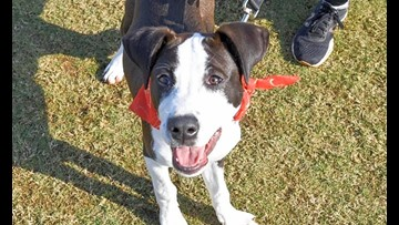 7 perfect pups to adopt now in New Orleans