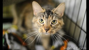 7 cool kitties to adopt now in New Orleans