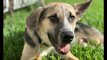 6 adorable pups to adopt now in New Orleans