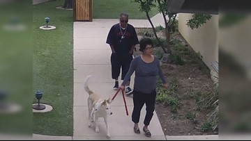 Couple caught on camera stealing puppy returns him to SA Humane Society
