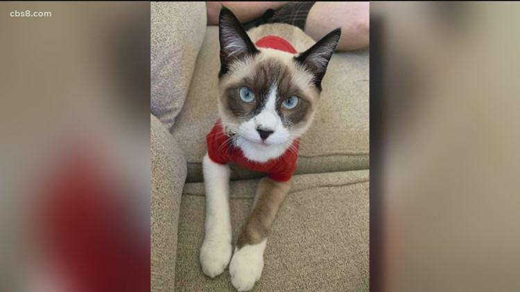 Neighbor refuses to return missing cat