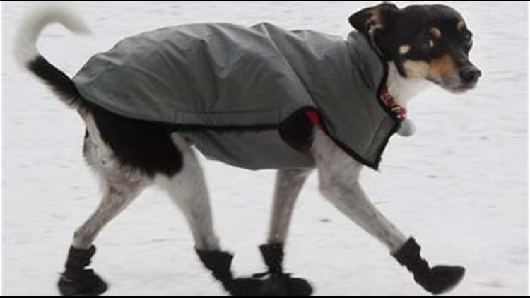 Important tips to keep pets safe from the bitter cold