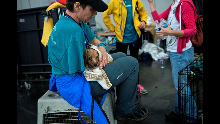 Facial recognition may reunite Harvey victims with their pets