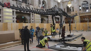 A Massive Dino Named 'Dippy' is Going Up on Display in Scotland