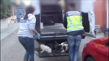270 Dogs Rescued After Spanish Police Raid Two Illegal Puppy Farms