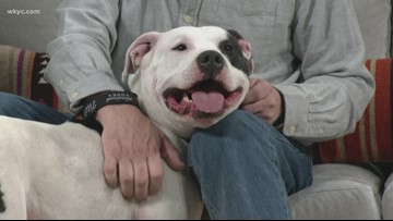 Coors Light is paying dog adoption fees across the country until Feb. 21