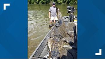 South Carolina hunters catch 12 foot, 726 pound gator