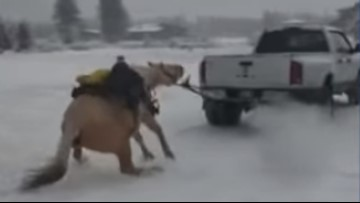 Two people arrested for pulling a horse behind a pickup truck