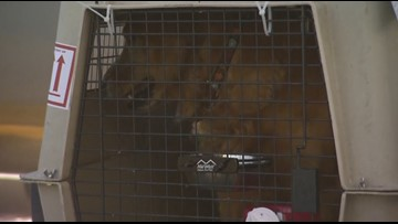 Pets on a plane? You can prepare but it's not without risk, vet says