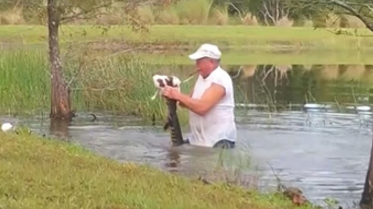 Florida man jumps into pond, wrestles alligator to save puppy