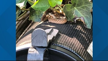 Snake on a mailbox halts mail delivery until it's relocated