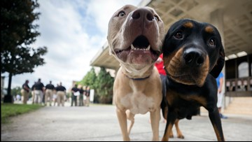 Florida bill would make it a crime to leave behind a dog during a hurricane