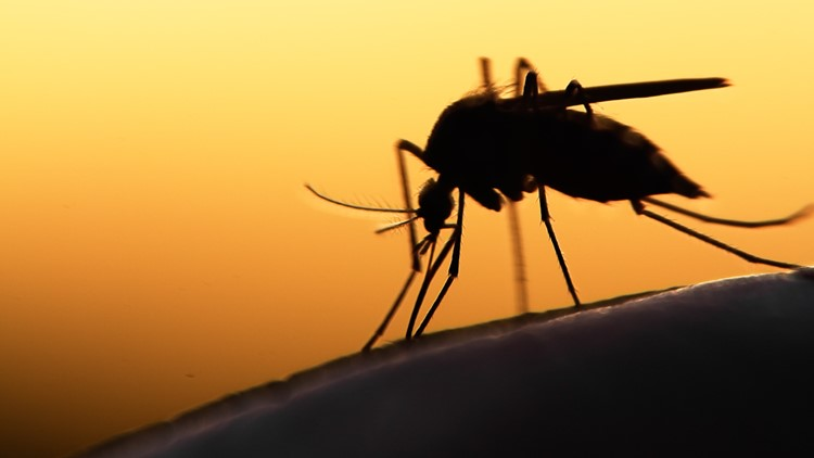 Floodwater mosquitos nearly triple in St. Tammany after Hurricane Ida