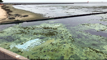Toxic algae keep Mississippi beaches closed after Hurricane Barry