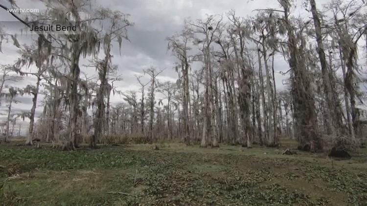 Key program for coastal restoration is spending millions on forests instead
