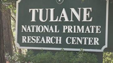 Tulane primate research facility works on coronavirus vaccine