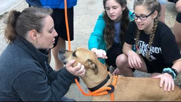 After 'Pit Bulls & Parolees' New Orleans shelter floods, fans walk dogs, donate blankets