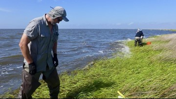 Study: Louisiana marshes will take longer to recover from Deepwater Horizon oil spill