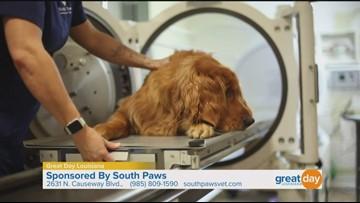 South Paws offers pet rehabilitation