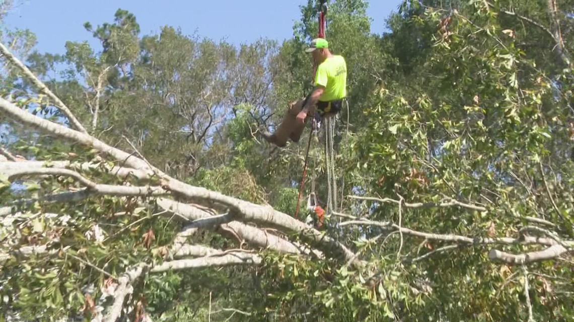 Tree removal crew answers Ponchatoula woman's plea for help