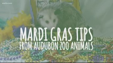 Carnival tips from the Audubon Zoo!