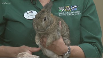 """""""Adopt"""" a Rabbit from the Audubon Zoo"""