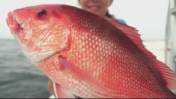 Louisiana's recreational red snapper season to begin May 24