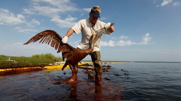 Oil spill money for bird rookery off Louisiana coast