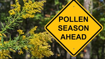 Pollen and Mold