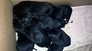 8 puppies tossed from bridge into Louisiana bayou; Reward offered