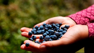 MACKIE: BLUEBERRIES CAN REDUCE PAIN, INFLAMMATION IN YOUR KNEES | wwltv.com