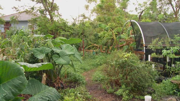 Local farmers in need after Hurricane Ida damaged crops