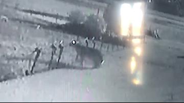 Video captures large rabbit 'vandalizing' Christmas lights in St. Charles Parish