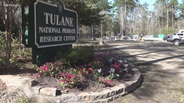Tulane Primate Center works on coronavirus vaccine
