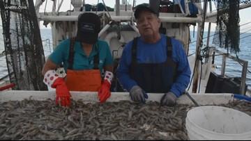 Fish & Game: Real shrimping