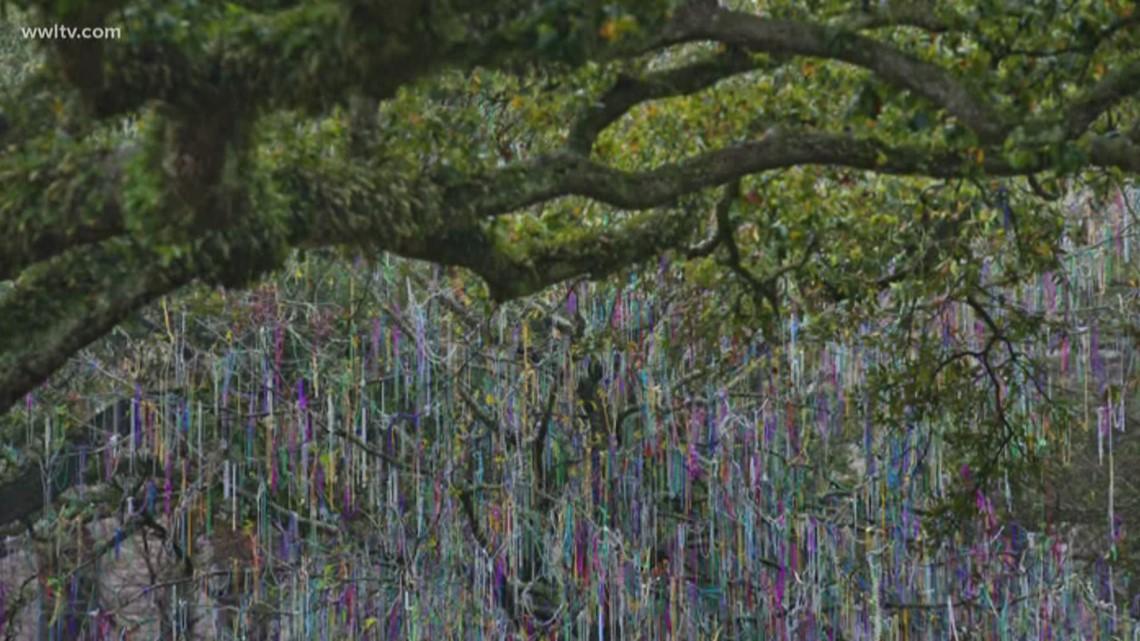 Tulane's Mardi Gras 'Bead Tree' torn down; students say goodbye