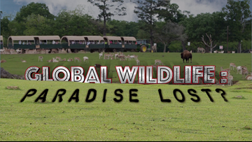 Global Wildlife: Paradise Lost? - An Eyewitness News Investigation