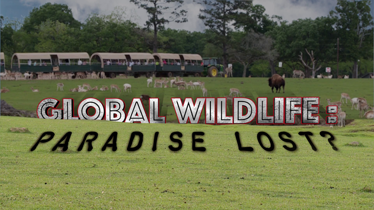 Global Wildlife: Paradise Lost - 'I would go home plenty of days and just cry'