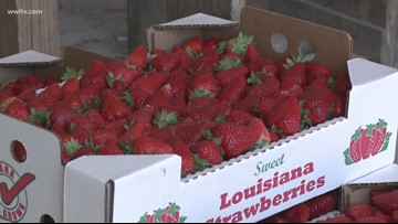 Tangipahoa, Lafourche work to draw tourists from each other
