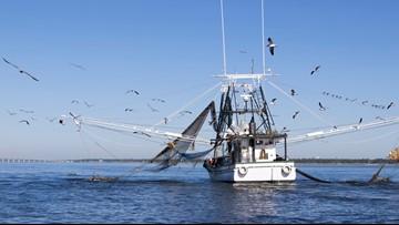 Mississippi shrimp season extended