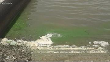 Storm in Gulf could break up toxic algae bloom