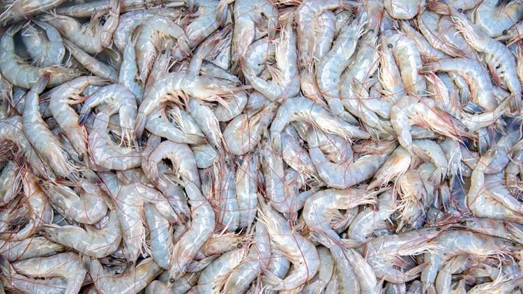 Louisiana's shrimp season starts Monday: 3 zones, 2 times | wwltv com