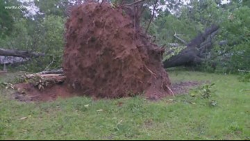 Possible tornado touches down in Amite, pulling trees from the ground
